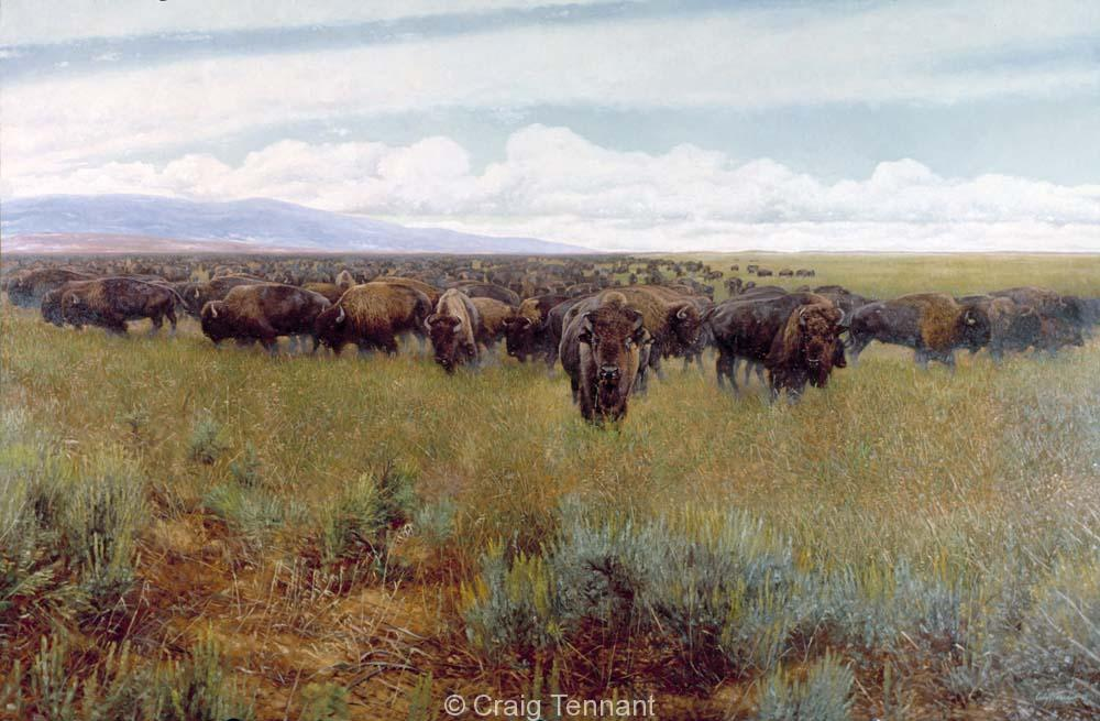 Buffalo Hunters II - Craig Tennant - Craig Tennant Originals